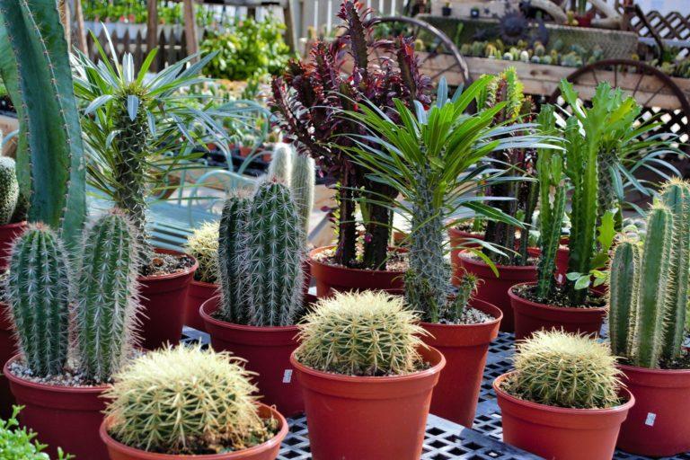 stutzman's greenhouse insert 3